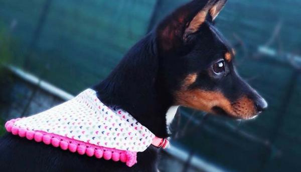 Cucito creativo: cucire una bandana per cani in 5 passaggi!